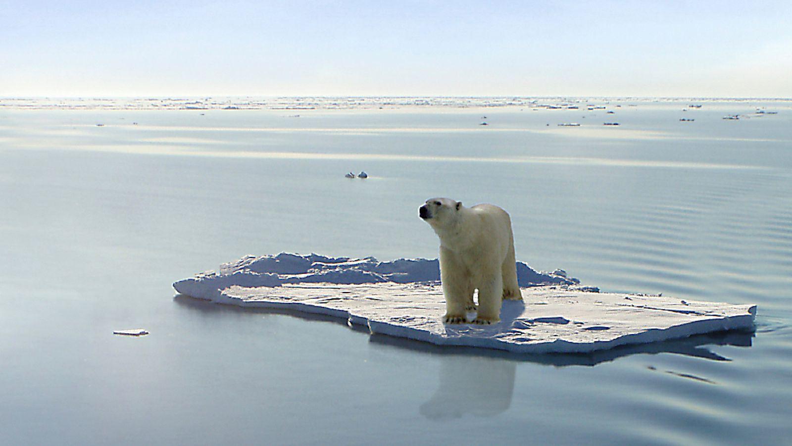 Urso polar | Gerard Van der Leun/ Creative Commons